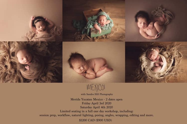 WS Sandra Hill Photography